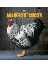 Tamara Staples | The Magnificent Chicken: Portraits of the Fairest Fowl